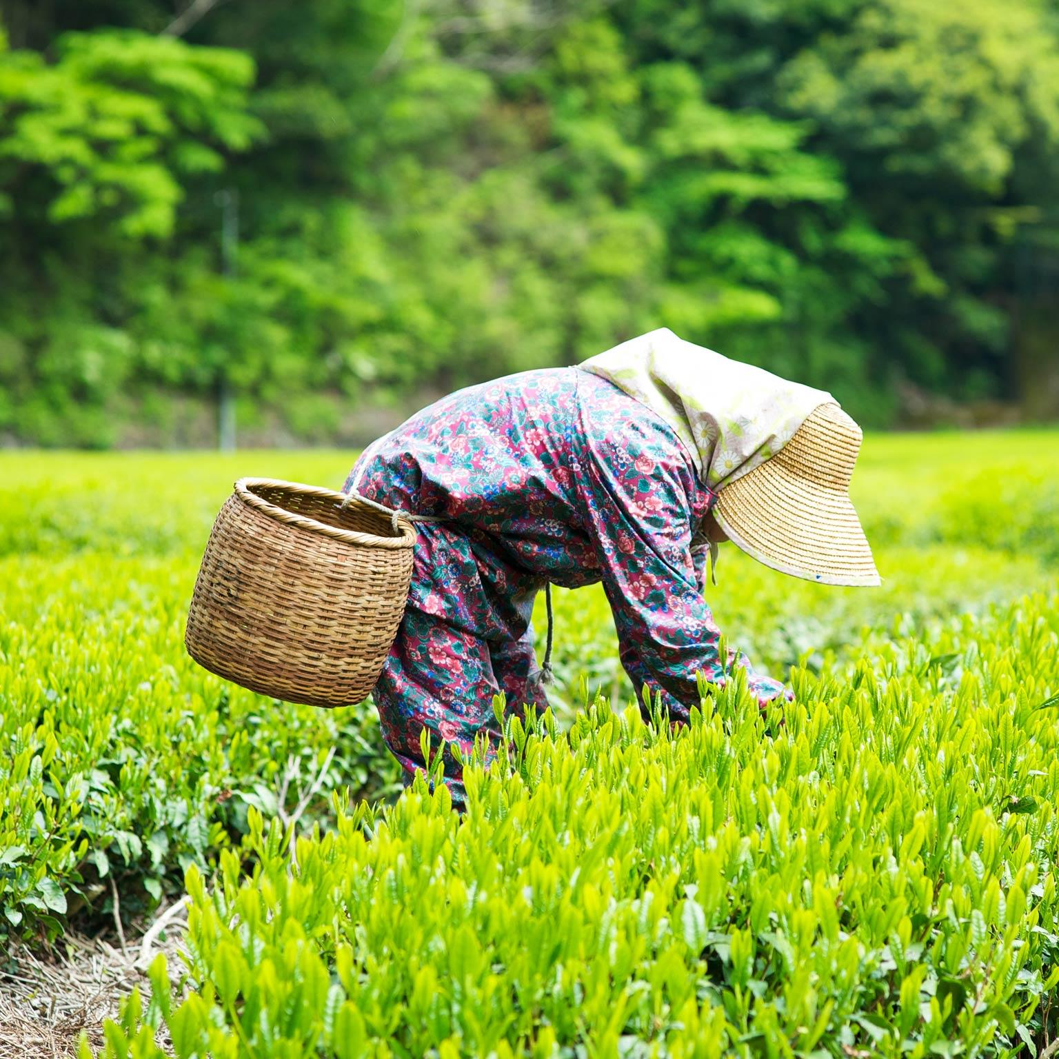 Impact of GST on Food And Agriculture