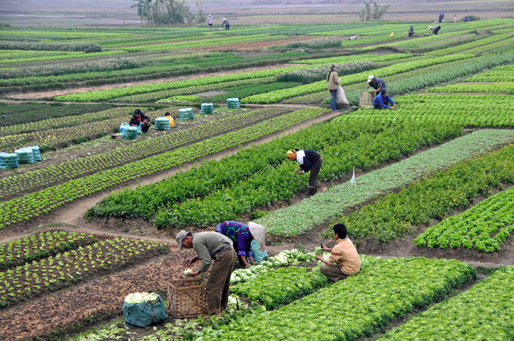 The First Steps of Organic Farming